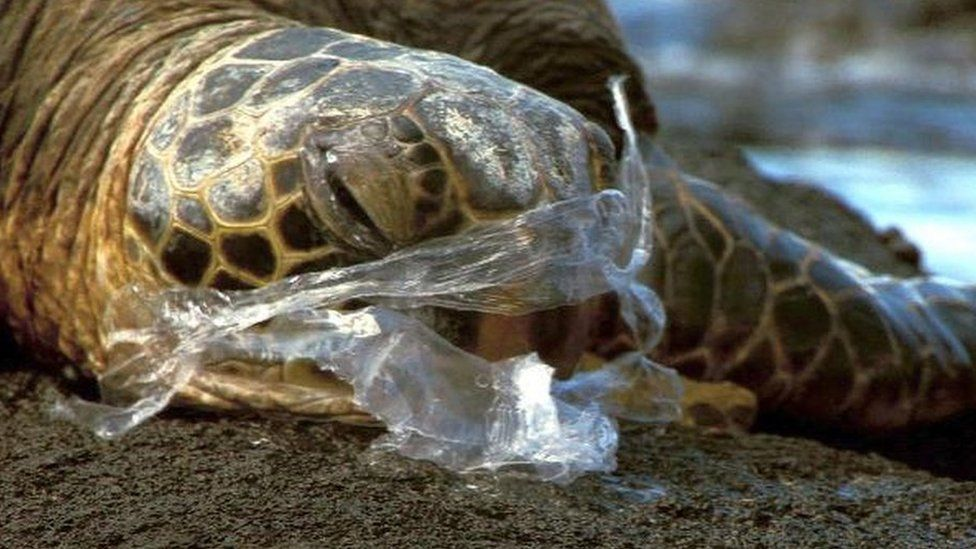_92606532_turtleandplastic